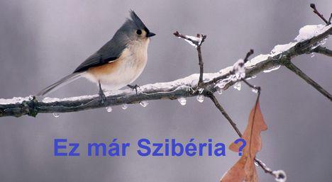 Szibéria!