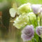 fehér virág 2