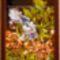 Irisz és pipacs