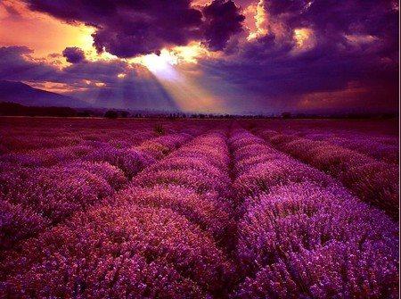 romantikus virágos táj
