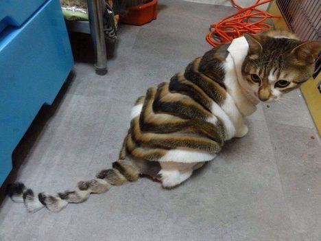 A macskát kérdezték?