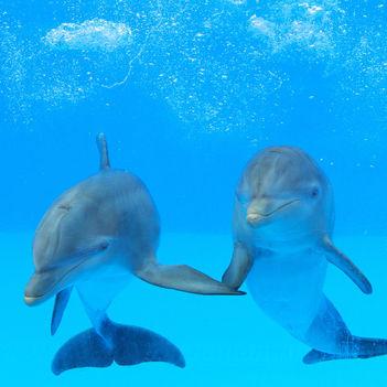 Delfinek 1