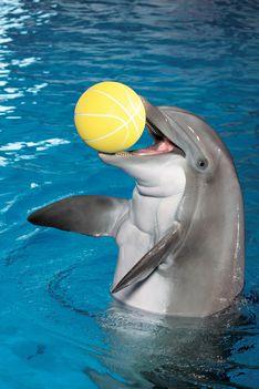 Delfinek 4