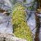 Lápos erdőben