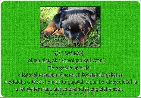Rottweiler olyan társ...