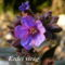 Tavaszi virágok 022