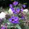 Tavaszi virágok 028