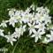 Tavaszi virágok 035