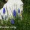 Tavaszi virágok 041