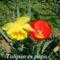 Tavaszi virágok 043