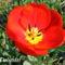 Tavaszi virágok 044