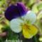 Tavaszi virágok 047