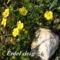 Tavaszi virágok 055