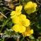 Tavaszi virágok 056