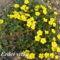 Tavaszi virágok 058