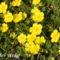 Tavaszi virágok 061