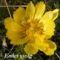 Tavaszi virágok 062