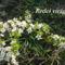 Tavaszi virágok 067