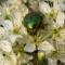 Tavaszi virágok 076