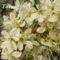 Tavaszi virágok 077
