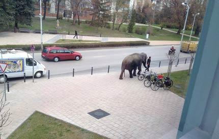 Elefánt Tatabánya belvárosában