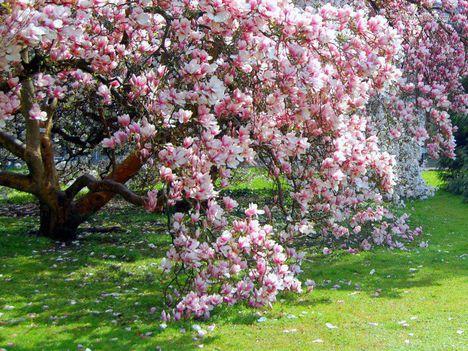 A tavasz (8)