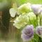 fehér színű virág a nyugi kertben 2