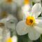 fehér színű virág a nyugi kertben 5