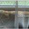 Cicusunk az ablakban