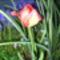 Egy kis virág