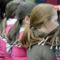 világ leghosszabb hajfonata