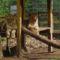 Nyíregyházi Állatpark (21)