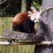 Nyíregyházi Állatpark (2)