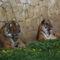 Zsuzsikánk a Nyíregyházi Állatpark-ból hozott érdekes bemutatót! Köszönjük  szépen!