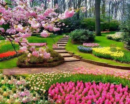 virágos park