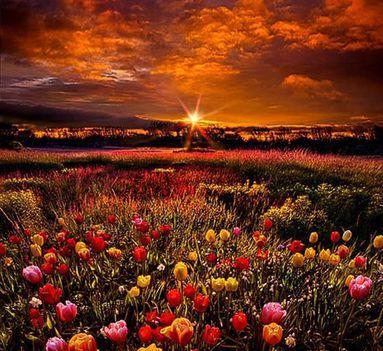 virágos táj