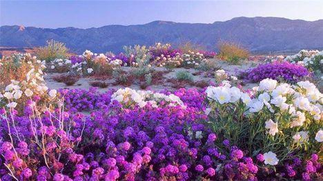 virágos táj-