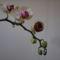 Lepkeorchidea (Phalaenopsis) 2
