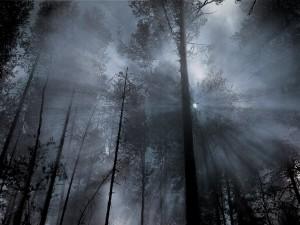 Sejtelmes erdő 10