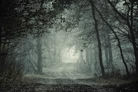Sejtelmes erdő 11