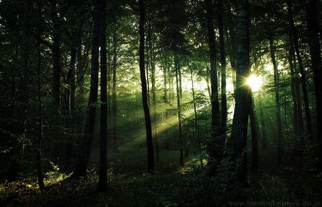 Sejtelmes erdő 12