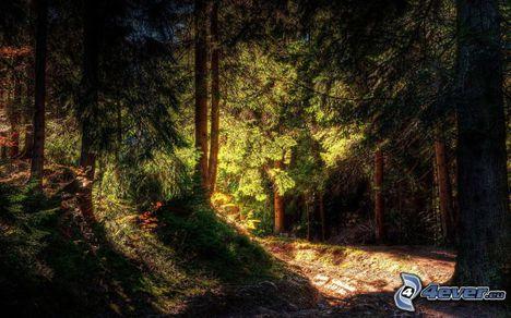 Sejtelmes erdő 13