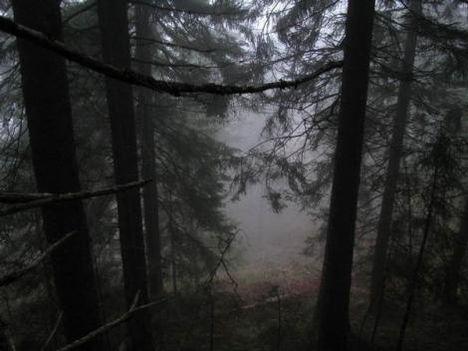 Sejtelmes erdő 14