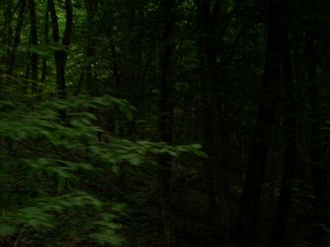 Sejtelmes erdő 15