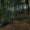 Sejtelmes erdő 1