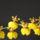 Zsolt orchideái