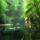 Amazonia_1_1920725_2963_t