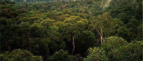 Amazónia 5