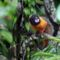 Amazónia 6