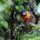 Amazonia_6_1920730_8919_t